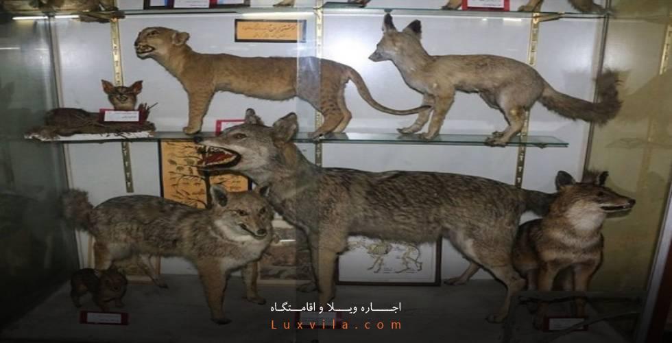 موزه تاریخ طبیعی و تنوع زیستی کرج