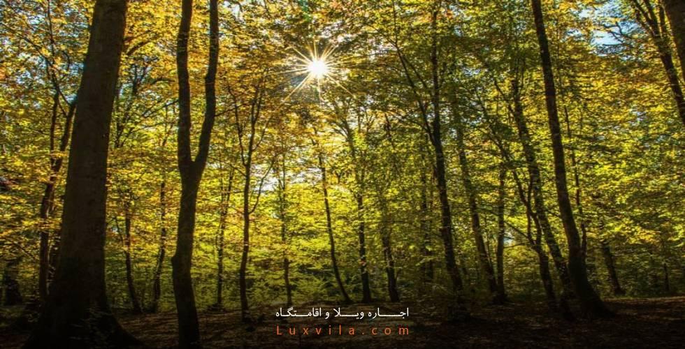 پارک میرزا کوچک خان جنگلی
