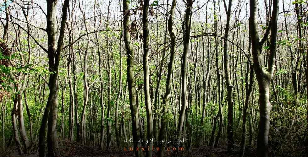 پارک جنگلی بزچفت کجاست