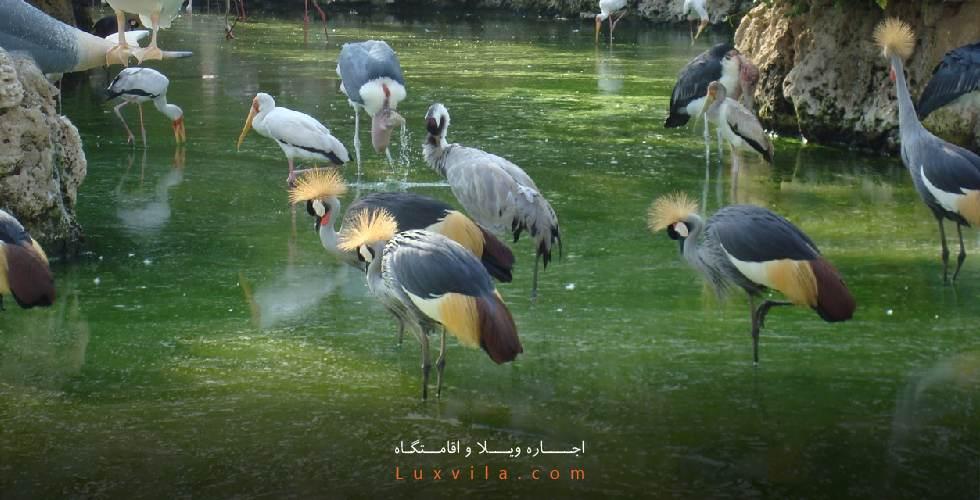 باغ پرندگان چهارباغ کرج