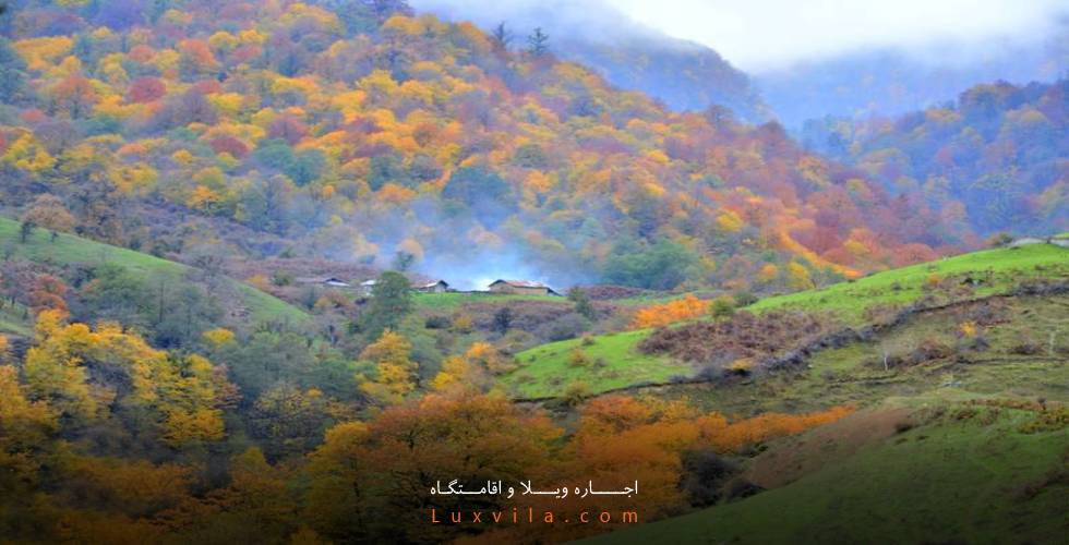 جنگل سنگچال و چلاو در روستای فیلبند