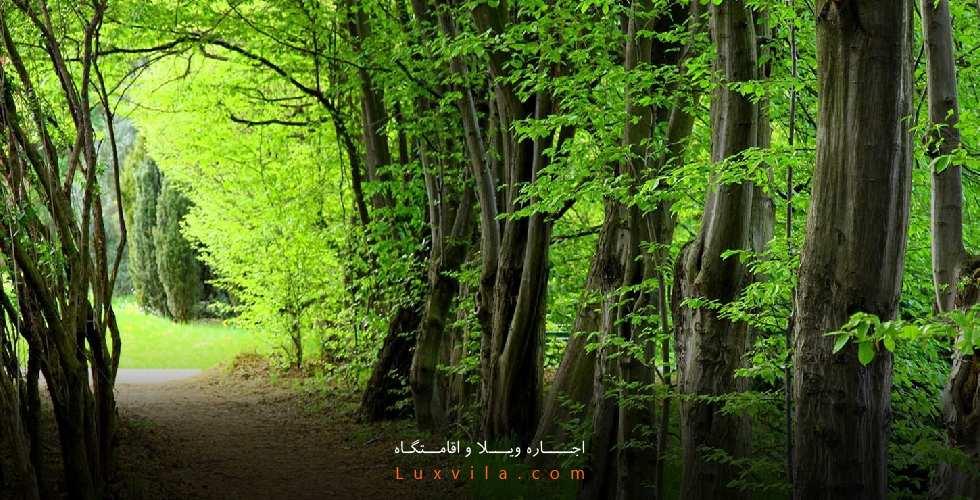 جنگل ویوج